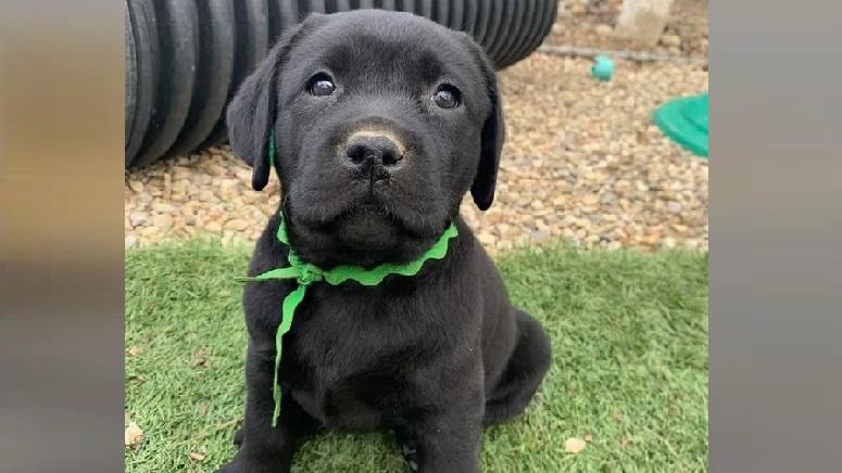 Licensing data reveals Boston's 25 most popular dog names ...