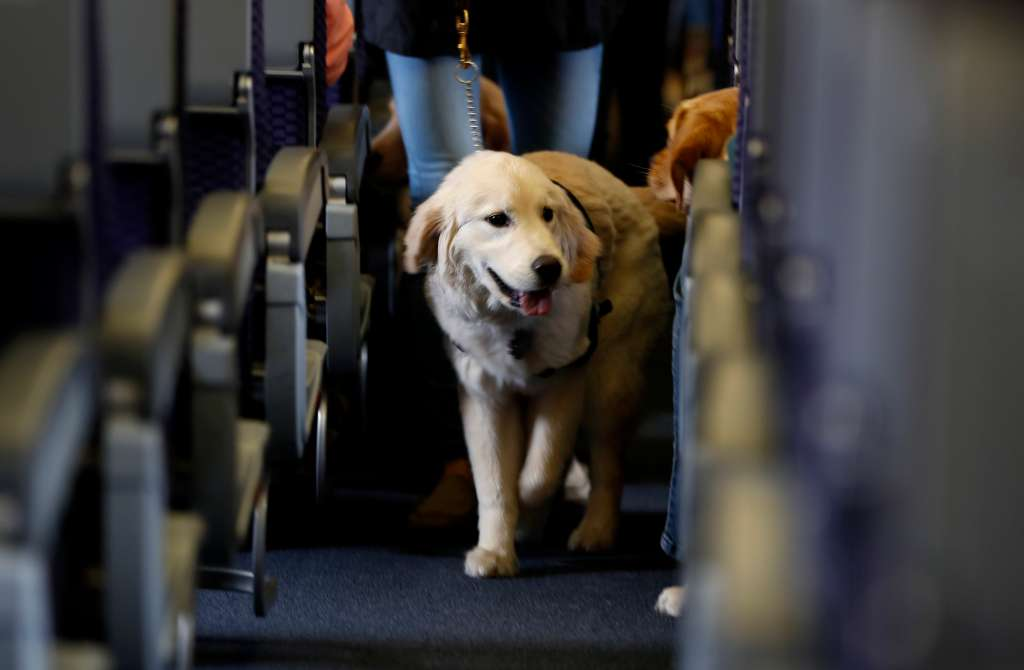 Airlines Service Animals