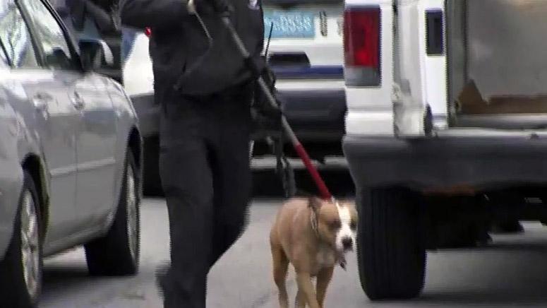 boston dog attack