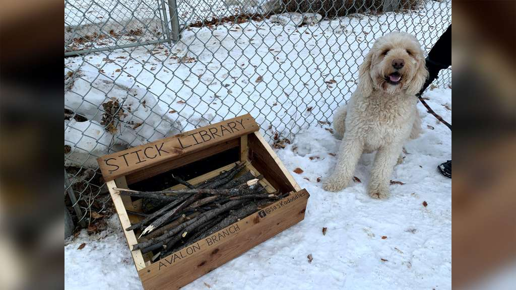 Innovative 10-year-old creates 'stick library' for local dogs