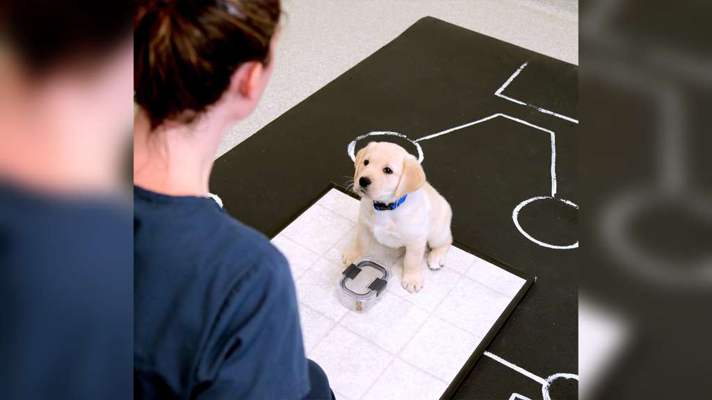 Puppy Social Skills