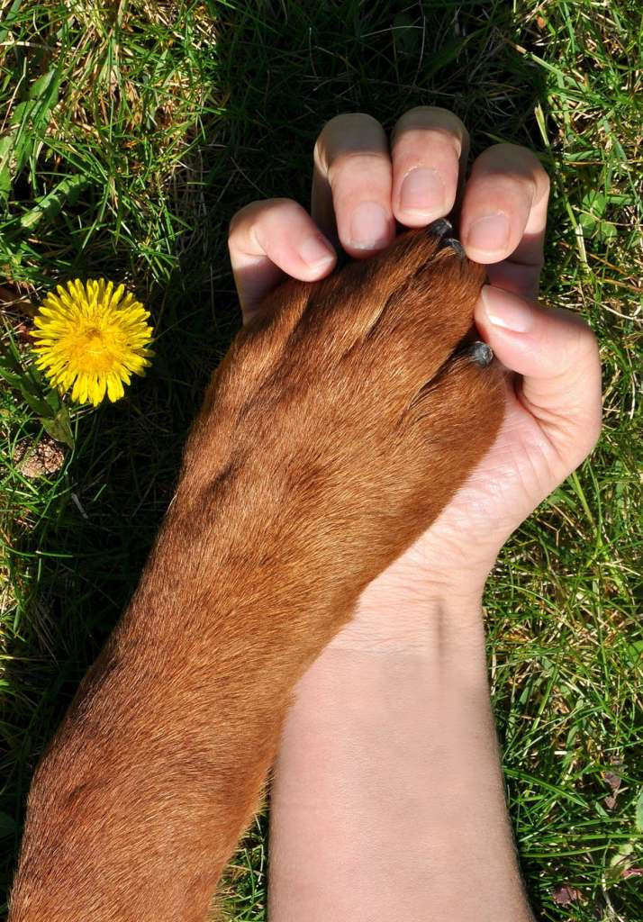 unrecognizable person holding dog paw on grassy meadow