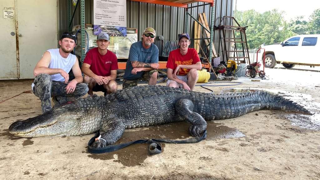 Alligator artifacts