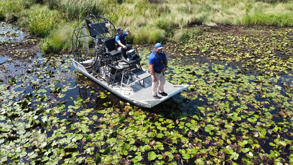 Human remains found in alligator stomach
