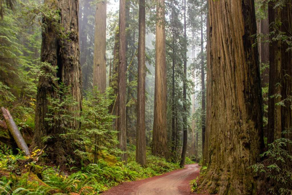 trees beside road